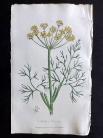 Cox Medical Botany 1822 Hand Col Botanical Print. Common Dill 42